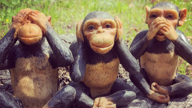 The 'No Evil' Monkeys Have Names